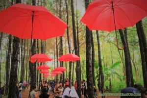 Hutan Pinus Sanggon