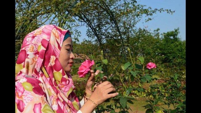Kebun Mawar Situhapa, Tempat Wisata Romantis di Garut