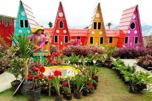 Green House Lazetta