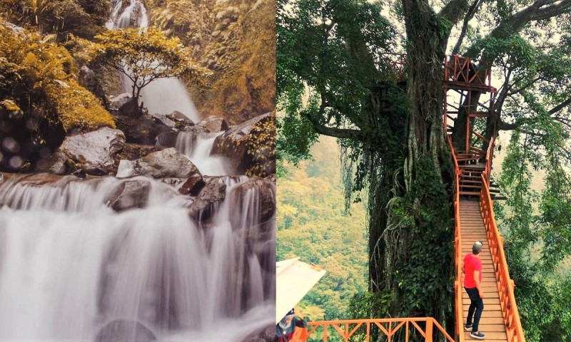 Rumah Pohon Dan Jembatan Kayu Gantung Curug Ciherang