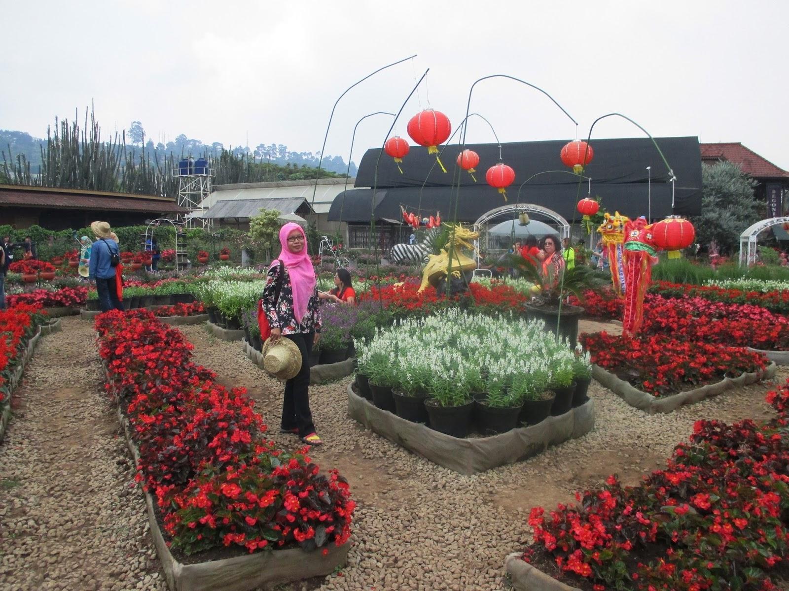 Kebun Begonia Kebun Begonia