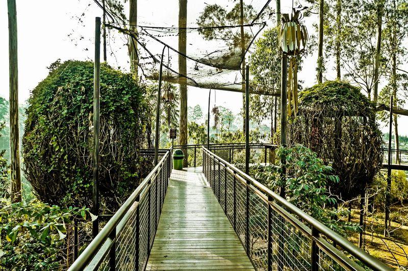 Tempat makan : Lutung Kasarung Dusun Bambu