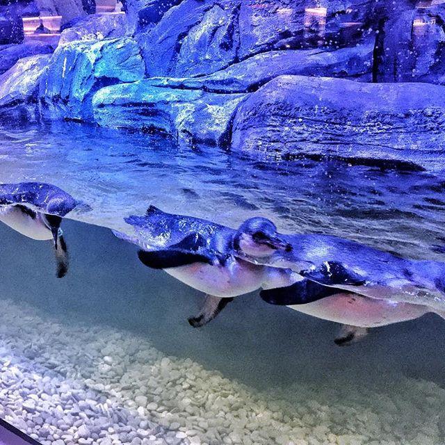 Aquarium Pingoo Resto