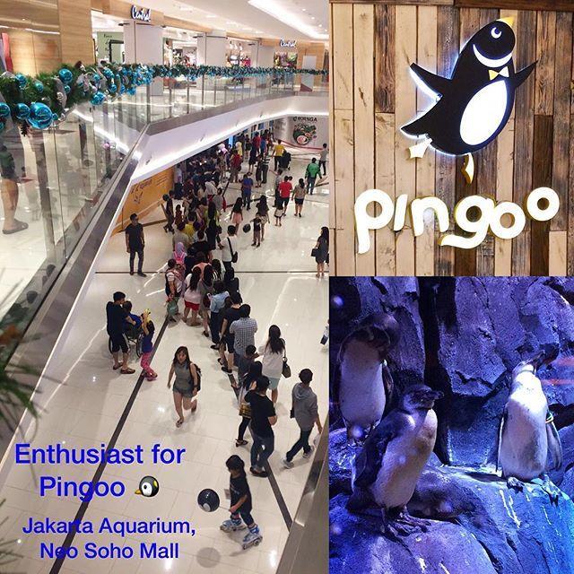 Apa Yang Menarik Di Pingoo Resto