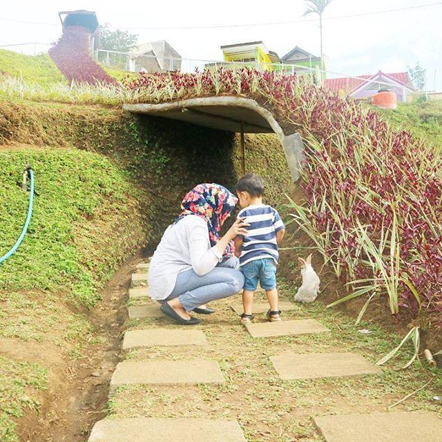Rumah kelinci Rumah Hobbit Taman kelinci & Rumah Hobbit