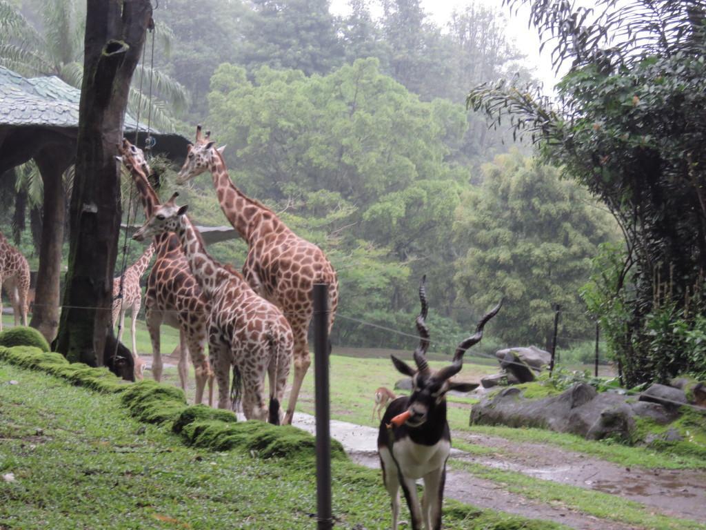 Taman Safari Bogor Taman Safari Bogor