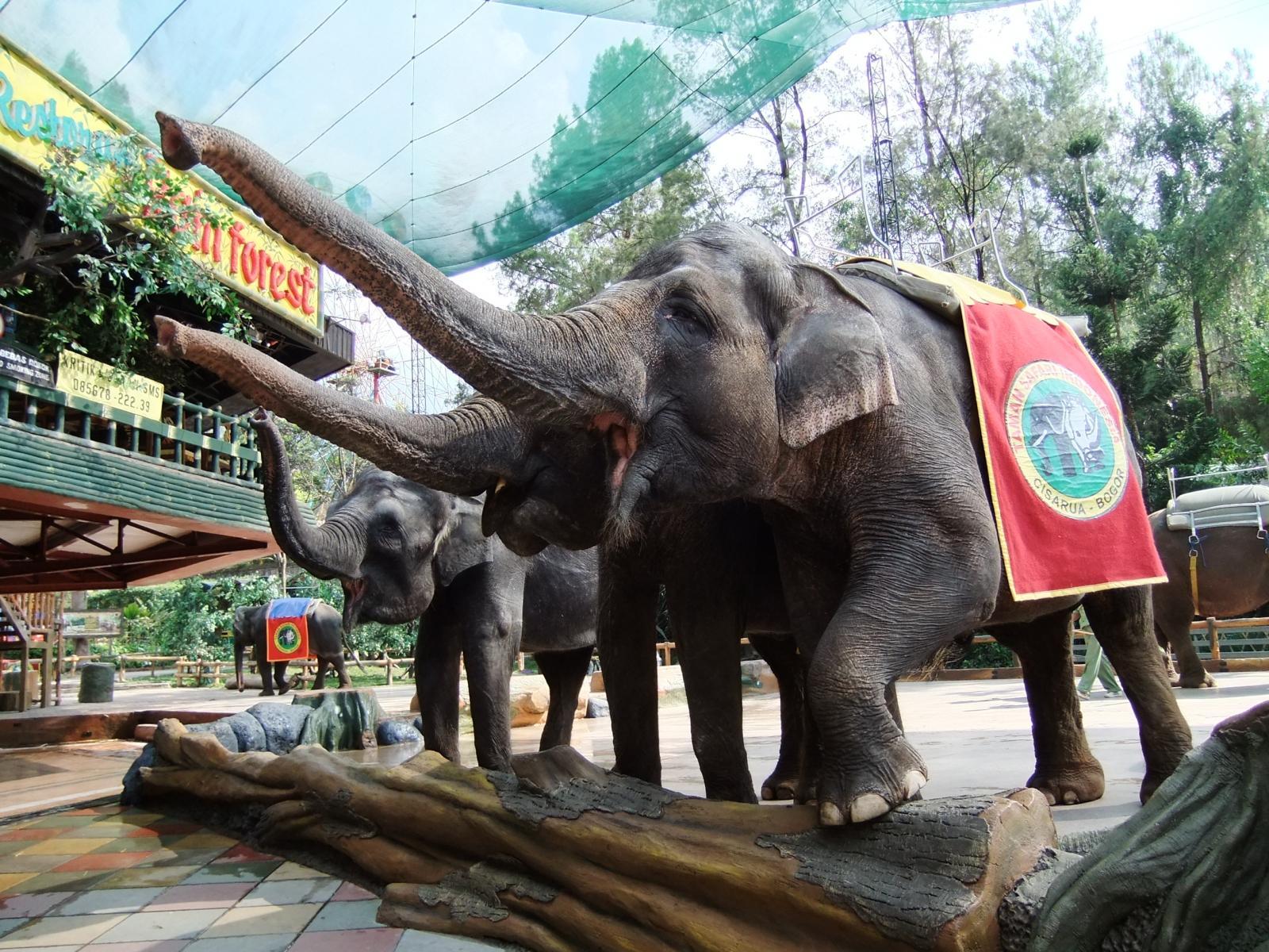 Wisata Taman Safari Bogor Puncak yang wajib dikunjungi!!!