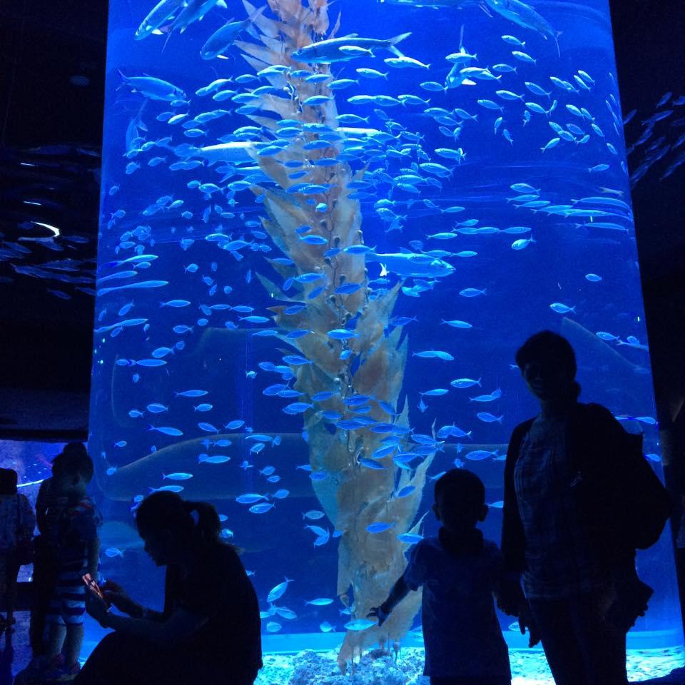 Jakarta aquarium 12 Jakarta Aquarium