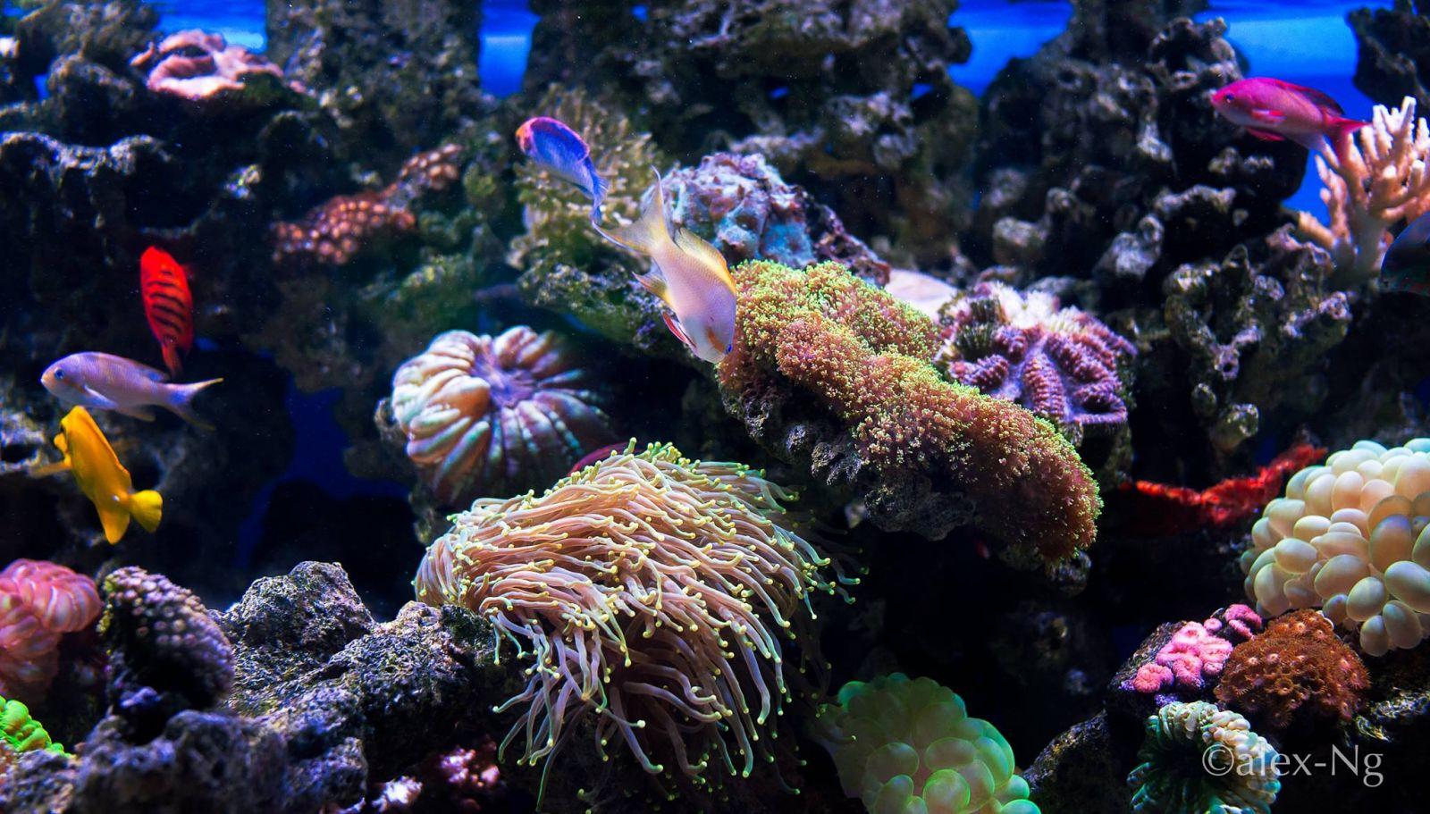 Jakarta aquarium 3 Jakarta Aquarium