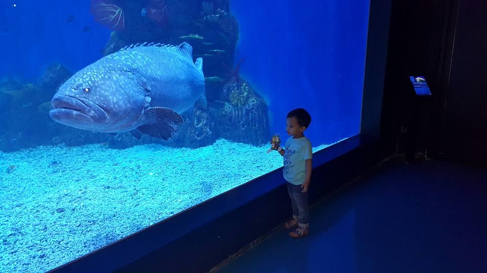 Jakarta aquarium 7 Jakarta Aquarium