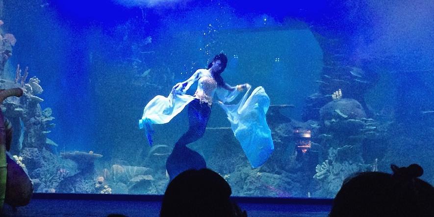 Jakarta Aquarium Kini Jakarta Tidak Hanya Punya Seaworld
