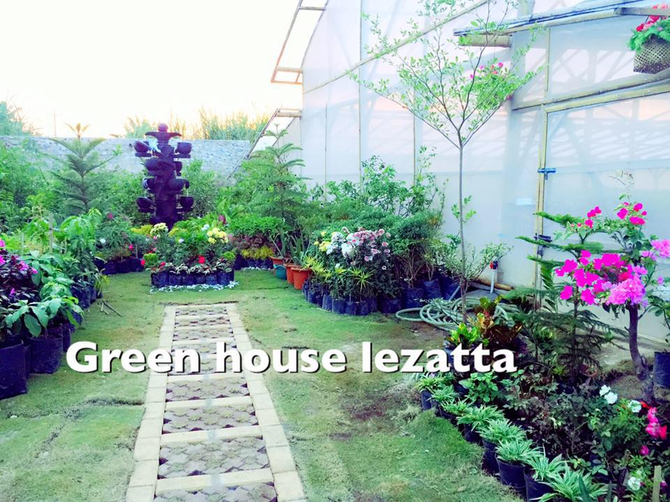 Green House Lazetta Green House Lazetta