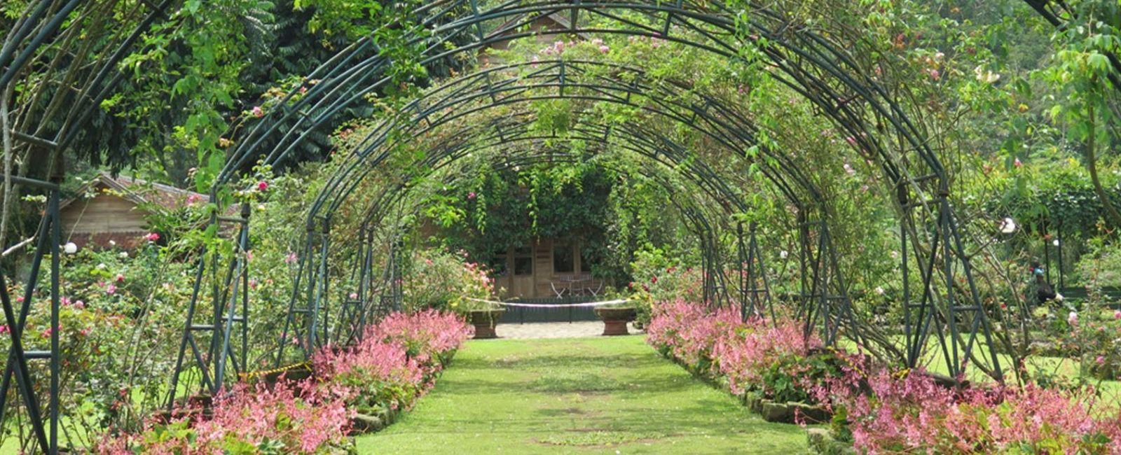 Kebun Mawar Situhapa Garut