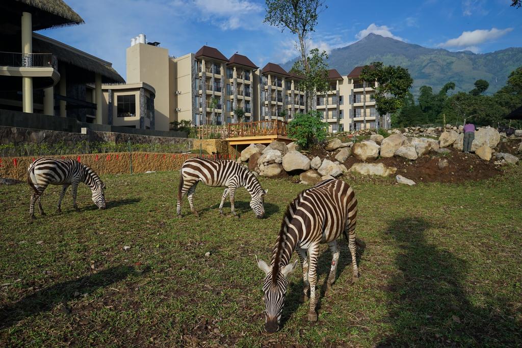 Taman Safari 2 Pasuruan
